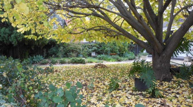 Autumn Gardening by Grajean's Gardening Services